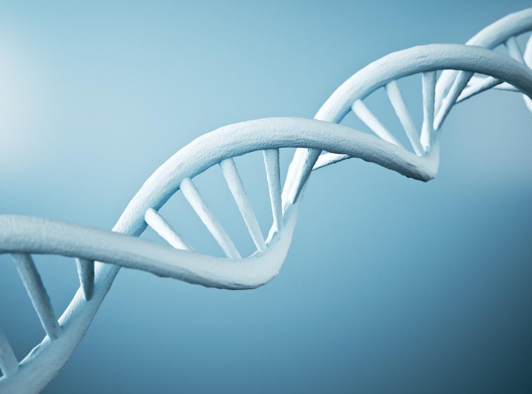 ADN Proder